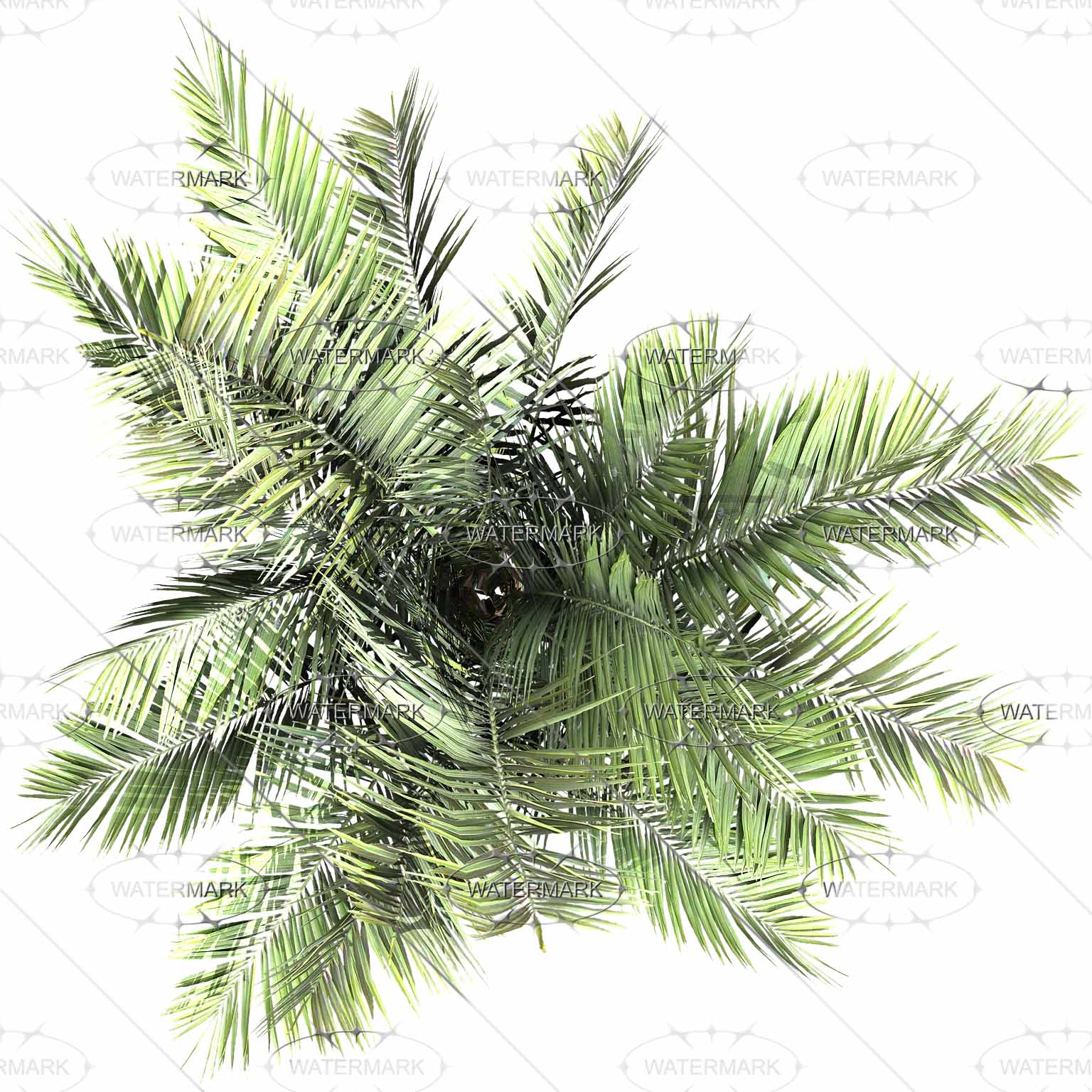 Top Palm 3 Set-VBVP_S_TOP_palm3000-000-00-00_00_0_all for Palm Tree Top View Png  268zmd